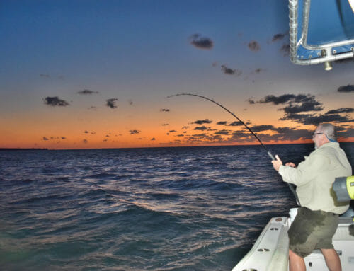 How to Catch Tarpon In The Florida Keys
