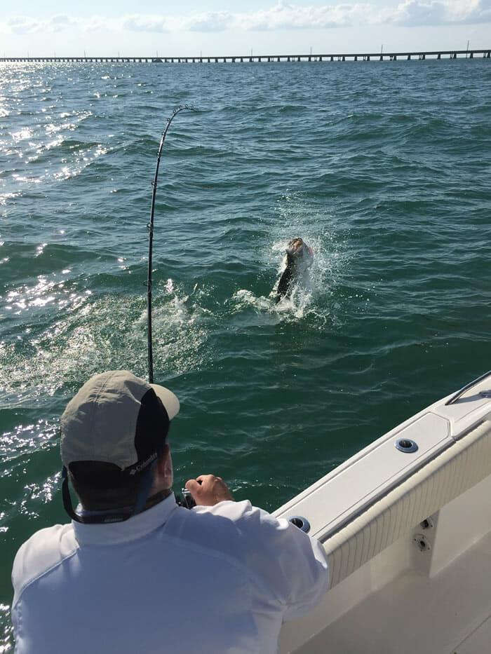 Tarpon Jump Florida Keys